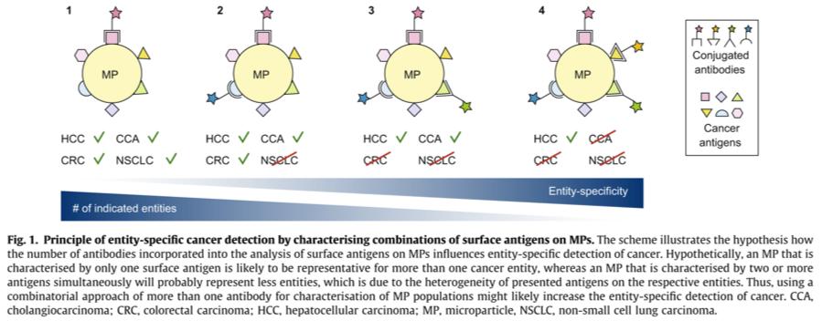 Prinzip der entitätsspezifischen Krebserkennung durch Charakterisierung der Kombination von Oberflächenantigenen